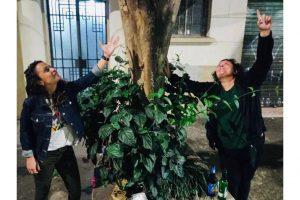 Quinze anos de As Árvores Somos Nozes: conheça a história de um dos maiores hits da internet brasileira, que vai virar NFT